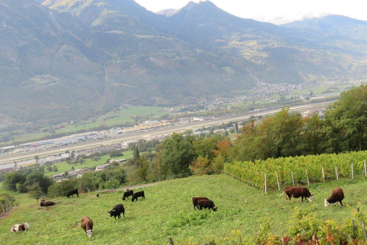 """E' stato riaperto il bando per l'adesione  ai regimi di qualità dei prodotti agricoli del """"Programma di sviluppo rurale"""": scadenza il 31 ottobre prossimo"""