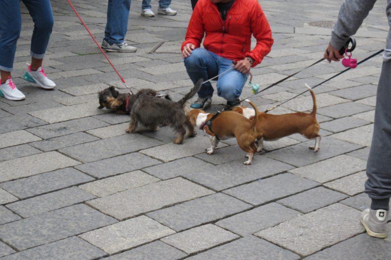 Cani a spasso per Aosta
