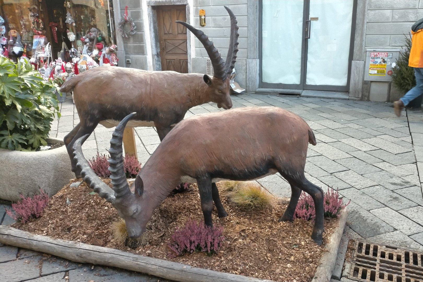 Gli stambecchi di Siro Viérin installati in via Croix de Ville ad Aosta
