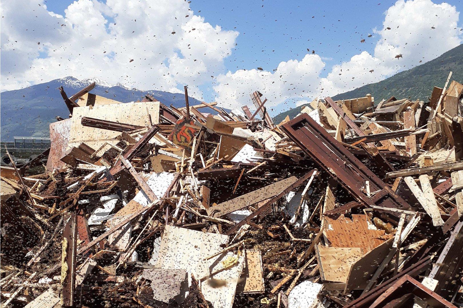 Invasione di api alla discarica, dopo che un'arnia è stata buttata via in mezzo al legname. Preoccupazione per il rischio di contagio della peste americana