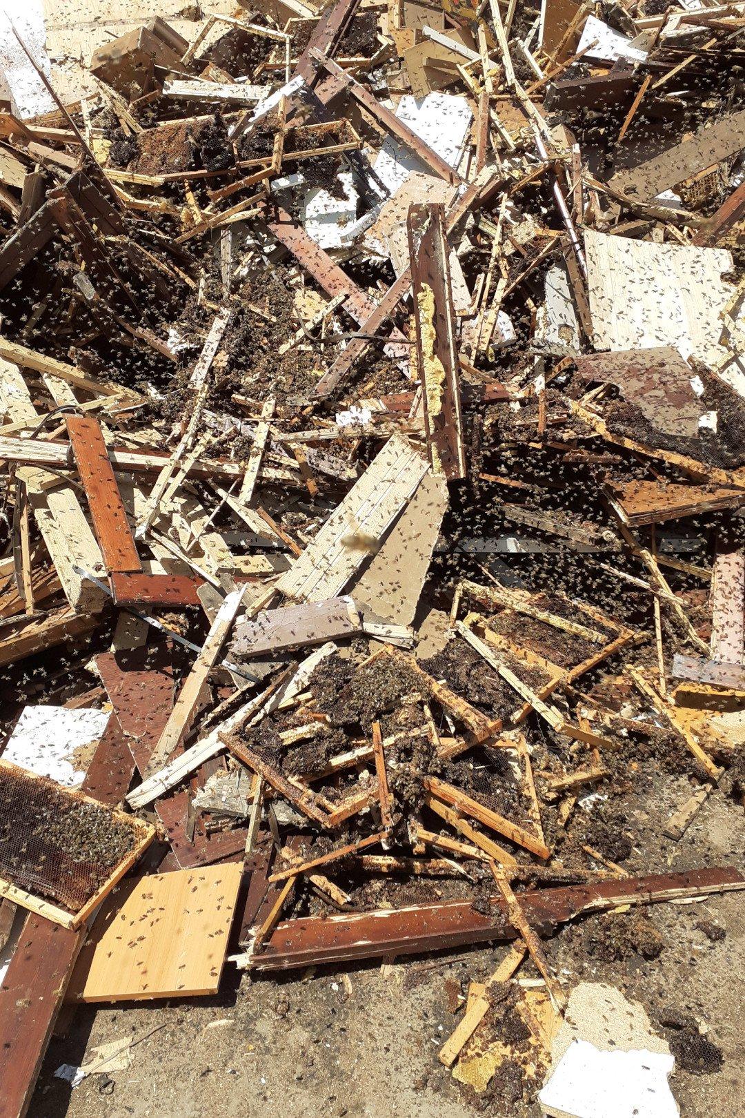 I favi in mezzo al legname invaso dalle api alla discarica di Brissogne